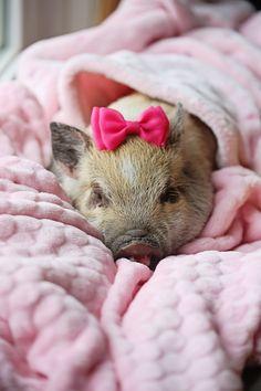 Lemon's 1st day home! Piggy in Pink