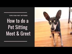 Pet Sitting Tips and Tricks: How to do a Pet Sitting Meet and Greet on Rover Pet Sitting Services, Pet Services, Pet Sitting Business, Easy Pets, Dog Hotel, R Dogs, Dog Training Tips, Dog Walking, Pet Care