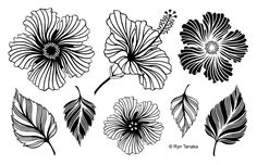 Now available at Kat Scrappiness.com Hibiscus UM-M5 Un...!  More info here:  http://www.katscrappiness.com/products/hibiscus-um-m5-unmounted-rubber-stamps-by-designs-by-ryn?utm_campaign=social_autopilot&utm_source=pin&utm_medium=pin