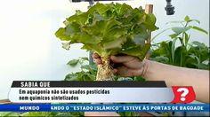 Reportagem RTP Aquaponia