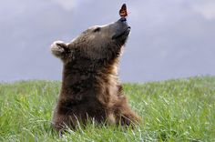 Sweet bear <3