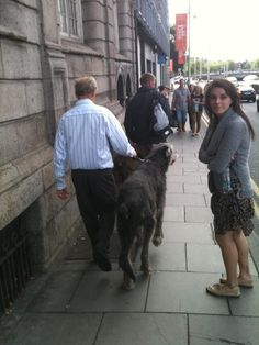 "Nikki Creighton '14 shares ""things you may encounter during study abroad in Dublin"" - Irish Wolfhounds. (photo: Nicole Egan '14)"