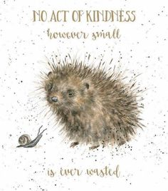 Wrendale Designs by Hannah Dale A Prickly Encounter Greeting Card - Set of Three Animal Paintings, Animal Drawings, Art Drawings, Watercolor Animals, Watercolor Paintings, Watercolour, Illustrations, Illustration Art, Decoupage