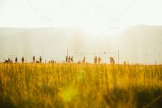 stock photo, outdoors, yellow, light, summer, sunrise, freedom, sports, beach-volleyball, volleyball, epic Low Angle Shot, World Images, Beach Volleyball, Sunrise, Freedom, Outdoors, Stock Photos, Yellow, Sports