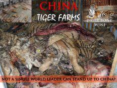 Shut Down China's Tiger Farms
