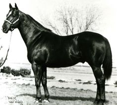 "With a big heart and blistering speed, Easy Jet earned a spot among the legendary figures of the Quarter Horse world."" Easy Jet was inducted into the Hall of Fame in 1993. Learn more about the AQHA Hall of Fame inductees at http://aqha.com/Foundation/Museum/Hall-of-Fame/Hall-of-Fame-Inductees.aspx ."