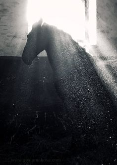 Stunning Horse Photography - find it here: https://www.facebook.com/pages/Gosia-M%C4%85kosa-Equine-Art-Photography/112934862109771?sk=photos