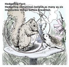 Dear Reader, Here we have one more selection of hedgehog facts following on our last Twenty Two Mind-Blowing Hedgehog Facts That Will Change The Way You Think About Hedgehogs Forever. We apologize …