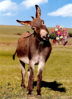 donkey with flowers - Google Search