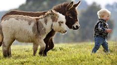 micro mini donkey for the micro mini farm!