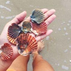 Imagen de summer, beach, and shell