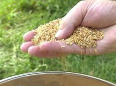 Castor oil granulates: Get rid of gophers and moles without harming them.