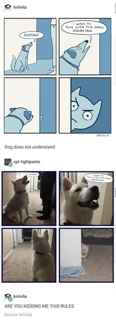 45 ideas funny anime memes lol animal pictures for 2019 Cute Funny Animals, Funny Cute, Funny Shit, The Funny, Funny Memes, Funny Stuff, Cat Memes, Super Funny, Funny Things