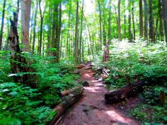 From the trailhead, continue along the pristine forests as you begin your climb upward