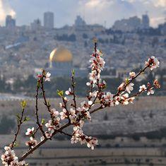 Springtime in al-Quds/Jerusalem, Palestine/Israel Palestine Art, Dome Of The Rock, Islamic Paintings, Christian Wallpaper, Cute Disney Wallpaper, World Peace, Beauty Art, Flower Photos, Islamic Art