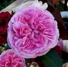 A little California Grown magic...California Grown roses #CAGrown