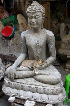 Just love this picture.  I do not think Buddha would mind.  Happiness is having a sleeping cat curled up in your lap.