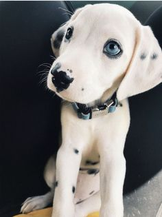 Unusual Looking Pets That Have Stolen Hearts Left And Right – Welpen Cute Dogs And Puppies, Baby Dogs, Doggies, Cute Animals Puppies, Boxer Puppies, Adorable Puppies, Cute Little Animals, Cute Funny Animals, Beautiful Dogs