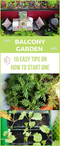 A balcony garden is a thing to be treasured in your memories forever. If you want to start your own balcony garden, here are some tips to get you started! #urbangardening #urbanfarming #gardening #diy #garden #ugrpost