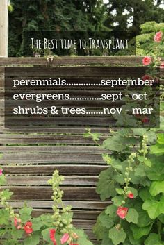 This is What Organic Gardeners Do in the Fall | Many gardeners do all the heavy lifting to prepare a garden in spring, but planning and planting a garden in the fall is not only good for your garden, it helps you maintain a garden organically and economically.  Read on to see how organic gardeners work the garden in fall, building structure and health as a foundation for the next season #sponsored