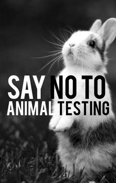 Say no to animal testing simply by choosing to avoid buying from brands that continue to test on animals! Animal testing for cosmetics is not required by law (except in China) and there are nearly 50 scientifically validated non-animal testing methods available. Say no to animal testing!: