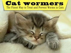 Cat wormers – the finest way to treat and prevent worms in cats