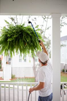 how to get big healthy ferns - Holy City Chic Tall Indoor Plants, Hanging Plants Outdoor, Porch Plants, Plants For Hanging Baskets, Fern Planters, Hanging Ferns, Ferns Care, Boston Ferns, Bedroom Plants