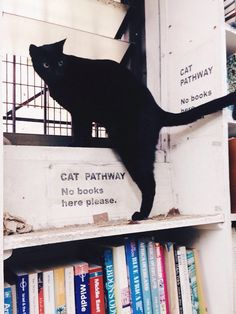 cat pathway no books here please hehe