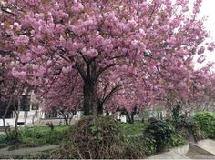 in a paris garden