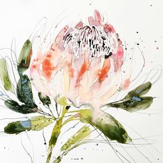 Researching flowers for an upcoming project and learned that the King Protea represents hope. Beautiful flower and meaning