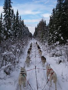 Dog Sledding...the most tranquil moments I've ever had.