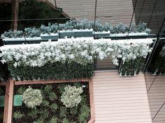 Otra de nuestras creaciones. Los Senecios son una estupenda elección para este tipo de jardines.
