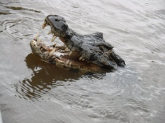 """The Pantanal, Brazil, where Luisa Rodriguez uncovers a sinister plot in """"Implodes"""".    www.disturbed-girl.com"""