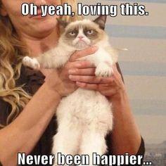 Grumpy cat quotes, funny grumpy cat, grumpy cat meme, funny grumpy cat, grumpy cat jokes …For more funnies and hilarious jokes visit www. I Love Cats, Cute Cats, Funny Cats, Funny Animals, Cute Animals, Animal Memes, Animal Funnies, Animal Antics, Meme Grumpy Cat