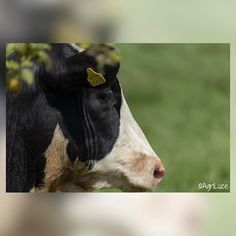 1 Image, Uk Shop, Cows, About Uk, Followers, Calves, Ireland, Destinations, Photograph