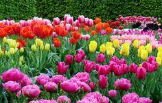 La Vie of Beauty: Tag   Lente