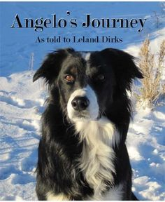 Angelo's Journey: A Border Collie's Quest for Home: http://www.amazon.com/Angelos-Journey-Border-Collies-ebook/dp/B004RYW53U/?tag=extmon-20