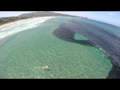 Anchovy school at Scripps Pier at Scripps Institution of Oceanography, UC San Diego in La Jolla, Calif., July 8, 2014 - YouTube - It's the biggest aggregation of anchovies seen in near-shore waters in three decades.