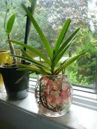 how to take care of an orchid plant outdoors
