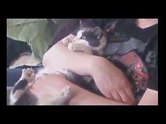 BEST Funny Videos 2016 Funny Cats Video Funny Cat Videos Ever Funny Animals Funny Fails 2016 - https://positivelifemagazine.com/best-funny-videos-2016-funny-cats-video-funny-cat-videos-ever-funny-animals-funny-fails-2016/ http://img.youtube.com/vi/kkqZ4xa8KP8/0.jpg  حياة في البرية حياة الغابة حيوانات برية حيوانات متوحسة حيوانات لطيفة حيوانات أليفة نمور الأسد القط ناسيونا… Judy Di