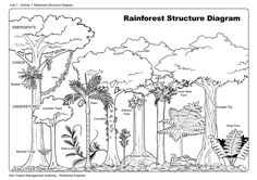 how to draw forest plants - Bing Images
