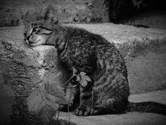 Cats W & B : Photo
