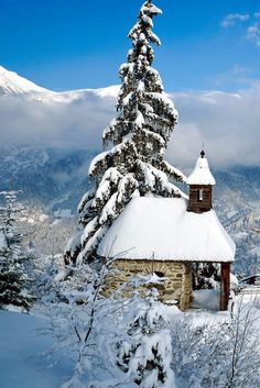 Stone cabin  and pine in the snow...