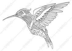 Hummingbird Adult Coloring Book Page. by ColoringPageExpress
