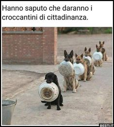 Hanno saputo che | BESTI.it - immagini divertenti, foto, barzellette, video Animals And Pets, Funny Animals, Cute Animals, I Love Dogs, Cute Dogs, Italian Humor, Strange Photos, Dog Quotes, Shiba Inu