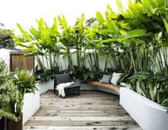 A small tropical garden with low-maintenance plants - - This award-winning design transforms a petite patch into an inviting, tropical-themed outdoor room. Small Tropical Gardens, Small Courtyard Gardens, Small Courtyards, Small Gardens, Outdoor Gardens, Courtyard Ideas, Rooftop Gardens, Small Backyard Gardens, Large Backyard