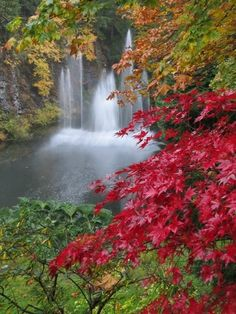 Autumn 2012 - maples at the fountain Butchart Gardens, BC Most Beautiful Gardens, Beautiful Flowers Garden, Beautiful World, Beautiful Waterfalls, Beautiful Landscapes, Victoria Attractions, Buchart Gardens, Gardens Of The World, Famous Gardens