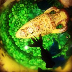#fish #aquarium #vase #water #iPhone | Flickr - Photo Sharing!
