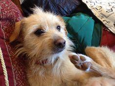 Lilly Il cane più PAZZO che io conosca .. Divertimento assicurato