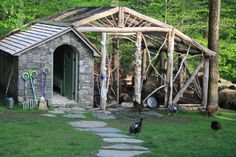 Chickens roaming outside their chicken coop built by Fairfield House & Garden Company